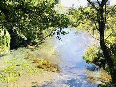 柿田川も、川底からぷくぷくと水がわいているのがよーく見えます。 (写真じゃ全然伝わんないな)