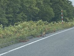 狐が道路脇にいました。