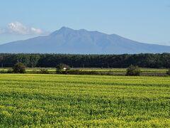 車窓観光その2。斜里岳。畑を黄色く彩るのはキガラシの花。菜の花の仲間で、畑の肥料にします。