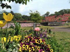 10:05 「長峰公園」(栃木県矢板市) 芝生広場を囲むように、季節の花が咲く花壇や、東屋などがあります。 写真右奥のつつじはこの地方の種類のようです。ヤシオツツジだっけ? このあとの日程を考えて、かなり早めですが、この公園で昼食休憩をとりました。 持参したおにぎりやお茶でピクニック。