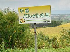 パレットの丘。9月下旬~10月にかけて、向日葵が見頃だそうで。 出かける直前まで知りませんでした。