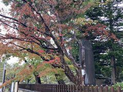 公園内は気持ちの良い散歩ができます。紅葉が、木の種類によってはこの時期すでに始まっていました。
