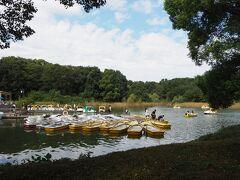 いきなり、水鳥の池が広がり手漕ぎボートサイクルボートを楽しまれている皆さん。
