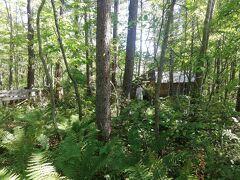 途中道に迷って2回お店に電話で聞いた。  林の中の小道を進むと木々の間に小屋らしきものが見えた。 マジか。これなのか?