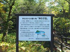神の子池 周囲約220m、水深5m、水温は年間通じて8度のため流木が腐らないそうです。 「熊出没、注意!」の看板があって、そっちの方が気になってしまってサクサク見て終了。