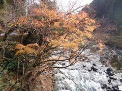 流石に12月では紅葉はほぼ残っていませんでした.