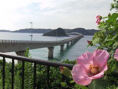 芙蓉の花と角島大橋