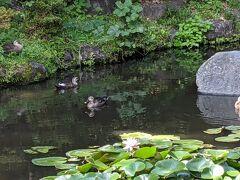 あまり気にしても仕方なく、お散歩に出掛けました。 野毛山公園の池