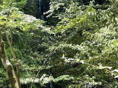 糸滝  水量が少なく、木の枝葉にさえぎられて見づらい…