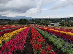 お目当てのパンを購入して、那須フラワーワールドに到着しました。  ここでは季節ごとの様々な花を楽しむことができます。 前回はルピナスの花で埋め尽くされていましたが、今回はケイトウ。