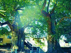 クスノキにお参りして、山王神社を後にします。