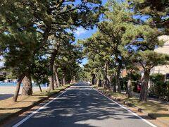 5<旧東海道松並木>  浜名湖に近い西区舞阪町には、今も旧東海道の松並木が約800メートルに渡って残っており、昔ながらの風情が感じられる。