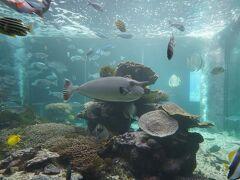 串本海中公園の水族館へ到着。