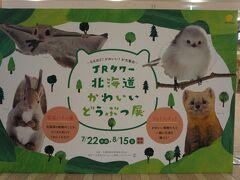 JRタワーでは北海道かわいい動物展開催中  パネルがあるだけで、あんまり派手な催しじゃなかったけど 写真は可愛い