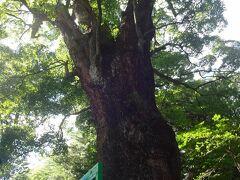 さて、次の目的地、ここも星が山公園同様初見です。  五所神社です。