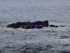 その岬の向こうにあるのが俎岩(まないたいわ)です。  日蓮聖人は鎌倉幕府に逆らって流罪となりますが、何と!この岩に置き去りにされたそうで、見かねた漁師が救い出したとのとです。  やがて2年後に赦免されたそうですが、かなりのご苦労をされたようですーー。