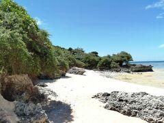 ペー浜の南端にあるのが「ハマシタン群落」。