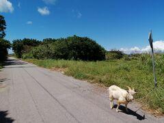 あちこちにヤギがいる。 途中「シムスケー(古井戸)」に寄りましたが秒殺スポットなので割愛。私はゆっくり昼めし休憩いたしましたが…。