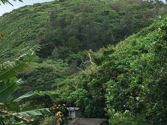 辺戸岬方面へ走ってもう一つのヤンバルクイナを見に行きます。丘の上に姿を見つけた時は衝撃的でした!