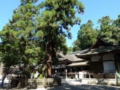 巳の神杉の向こうにみえる拝殿。