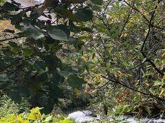 次はオシンコシンの滝。 むかしむかし滝の上にあたるところにホテルがありそこに行く旧道を通ると滝を上から見られるビューポイントがあったんで行ってみましたが道路はそのポイントの手前で通行止めになっており辛うじて撮った一枚がこちら。 なんだか解らないと思いますが白いところが滝が落ち込むところ、オシンコシンの滝の最上段です。