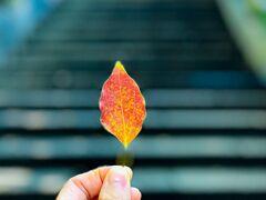 小さい秋み~つけた♪