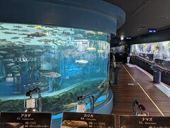 忍野八海の近くにある水族館へ。 淡水魚やこの辺りの生態系を展示してあるみたいで興味深く、そんなに規模は大きくなさそうですが言ってみることに。  淡水魚だけあって水槽はクリアーでとても綺麗。 広さも十分で、平日なのもあるけど人も少なく落ち着いてゆっくり観察出来ました。