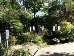 国分寺の万葉植物園
