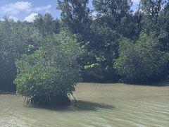 島尻のマングローブ林にも行きました