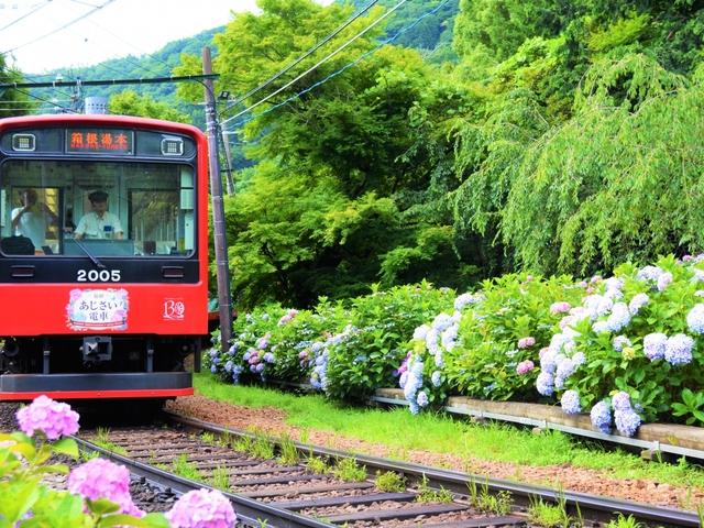 運行再開!箱根登山電車に乗って箱根へ♪おすすめ観光スポット&温泉を紹介