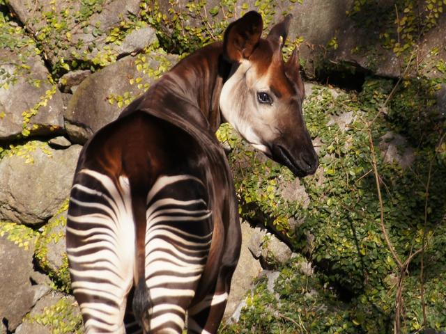 世にも奇妙な動物たち!? 世界三大珍獣に会える動物園9選