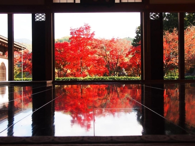 【2021年】関東で行くべき絶景紅葉スポット7選!日帰りで秋を満喫