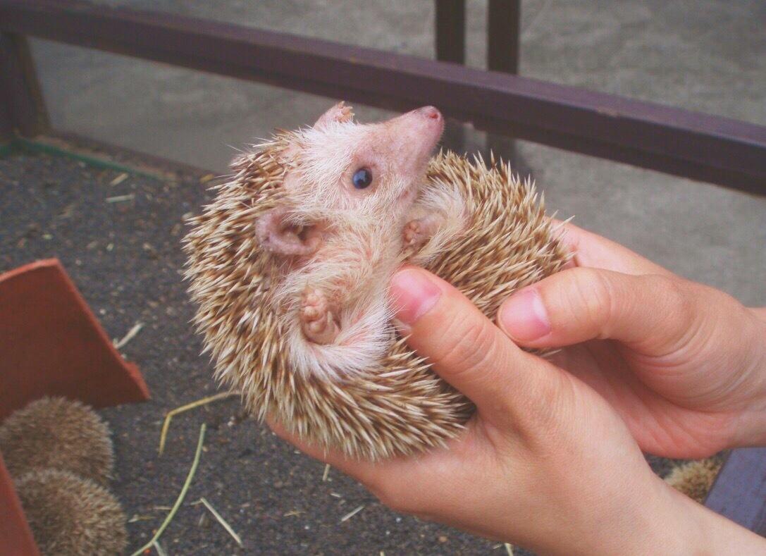 かわいいっ!思わず撮りたくなる動物と会える!関東の施設を集めました♪