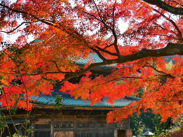 週末日帰りで紅葉を楽しむ!東京から行ける関東スポット10選