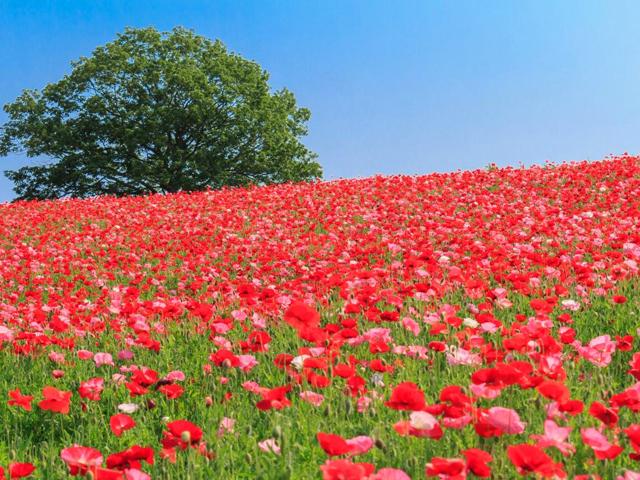 【2018年関東】東京から日帰りで行ける!絶景の花畑スポット10選