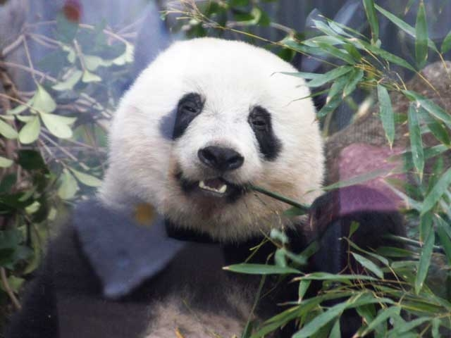 上野動物園、江戸東京博物館など19施設が2月24日に無料開放!