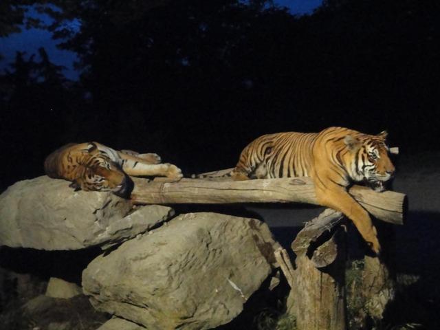 迫力満点!夜の動物たちと出会える国内ナイトサファリ7選