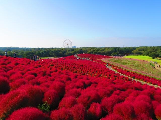 【2019・関東】日帰りで行く! 秋の絶景おでかけスポット13選