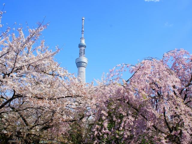 【2020年版】東京にある桜・お花見の名所15選!最新のイベント情報も