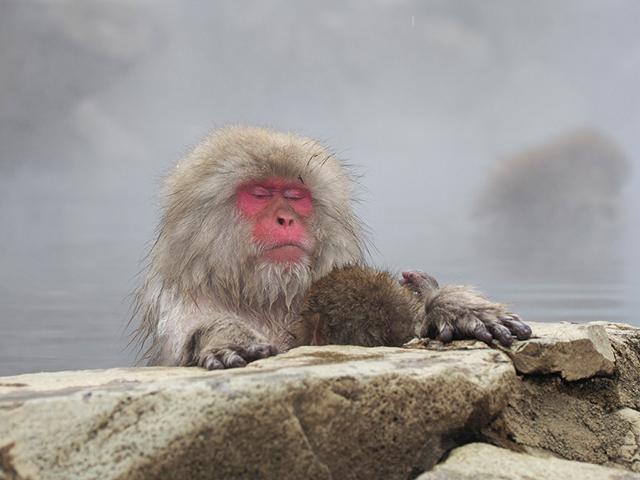 評判のよい長野の温泉最新ランキング!おすすめ日帰り湯や温泉宿も紹介