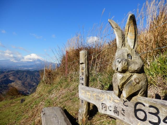 大野山のすすき