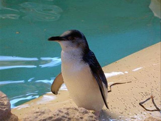 ペンギンアイランド