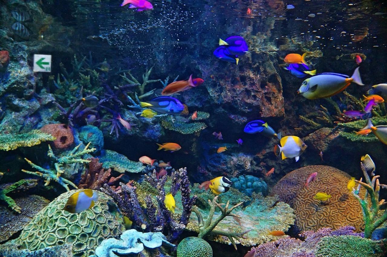 【東京都】サンシャイン水族館