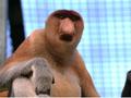 ロッカウィ動物園とコタキナバル市内観光ツアー<午前/コタキナバル発>