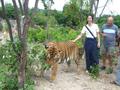 虎の孤児院!タイガーテンプル見学観光ツアー<1日/ビュッフェランチ付>