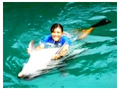イルカと一緒に泳ごう!入門コース&ゆったりスイミングタイム<午前or午後半日>