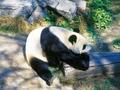 北京市内半日観光(頤和園と動物園)