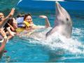 シーライフパーク・ハワイ イルカや海の動物と遊ぶ人気プログラムが充実!