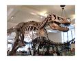 家族で行こう!アメリカ自然史博物館ツアー