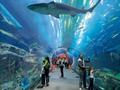 ドバイモール内の巨大水族館!ドバイ水族館&アンダーウォーターズー チケット予約